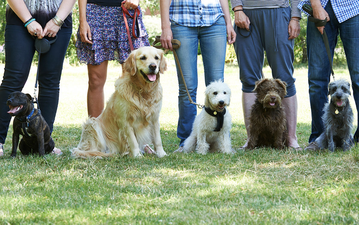 Group Classes at Best Paw Forward Bathurst