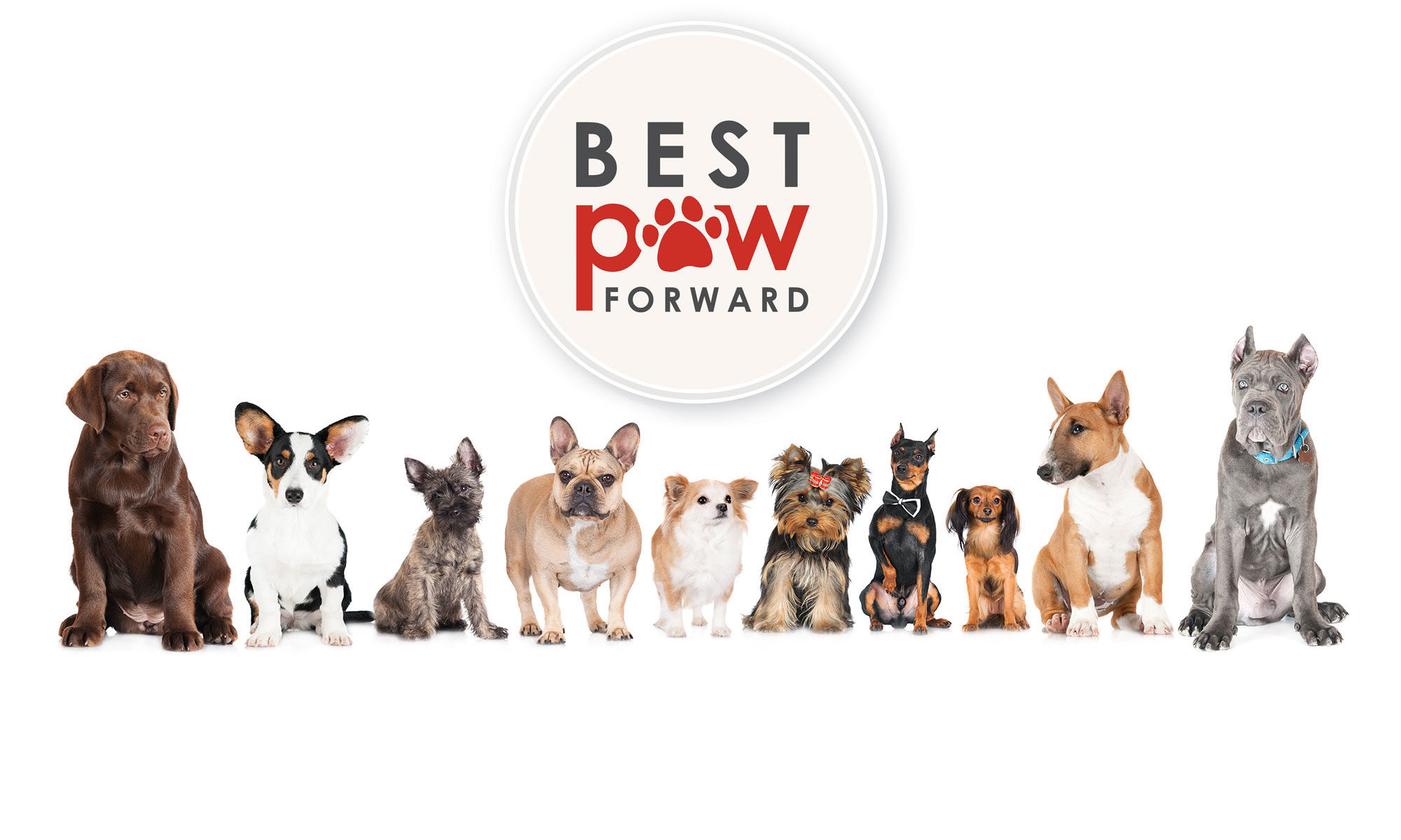 Best Paw Forward Bathurst