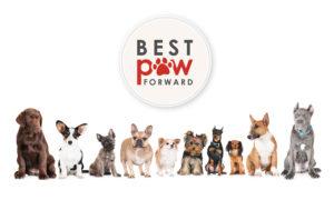 Best Paw Forward Bathurst NSW